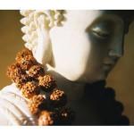 Mala Rudraksha 108 Cuentas_2